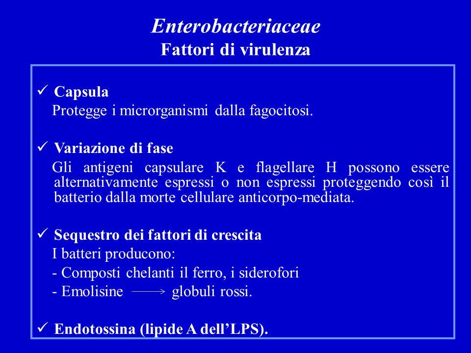 Infezioni sistemiche 1.Infezioni endogene.