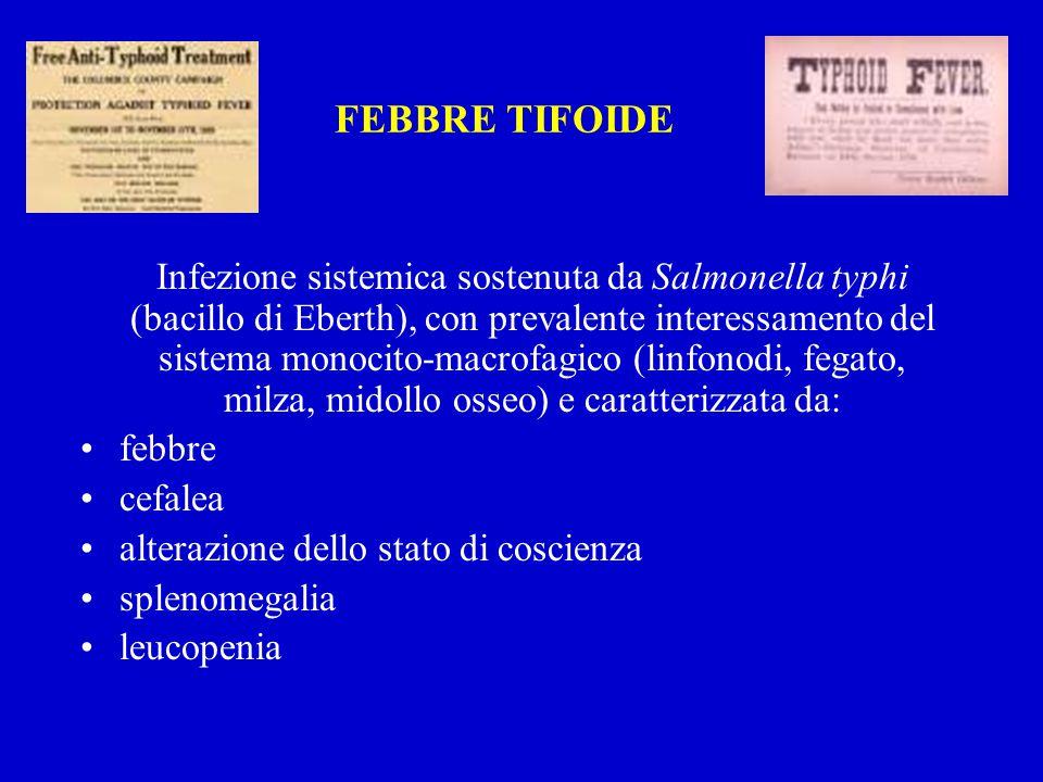 FEBBRE TIFOIDE Infezione sistemica sostenuta da Salmonella typhi (bacillo di Eberth), con prevalente interessamento del sistema monocito-macrofagico (linfonodi, fegato, milza, midollo osseo) e caratterizzata da: febbre cefalea alterazione dello stato di coscienza splenomegalia leucopenia