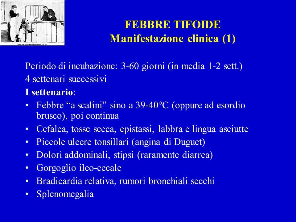 FEBBRE TIFOIDE Manifestazione clinica (1) Periodo di incubazione: 3-60 giorni (in media 1-2 sett.) 4 settenari successivi I settenario: Febbre a scalini sino a 39-40°C (oppure ad esordio brusco), poi continua Cefalea, tosse secca, epistassi, labbra e lingua asciutte Piccole ulcere tonsillari (angina di Duguet) Dolori addominali, stipsi (raramente diarrea) Gorgoglio ileo-cecale Bradicardia relativa, rumori bronchiali secchi Splenomegalia