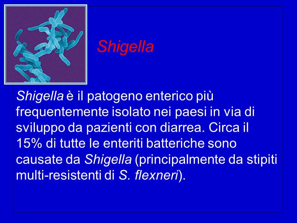 Shigella Shigella è il patogeno enterico più frequentemente isolato nei paesi in via di sviluppo da pazienti con diarrea.