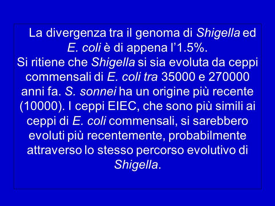 La divergenza tra il genoma di Shigella ed E.coli è di appena l'1.5%.