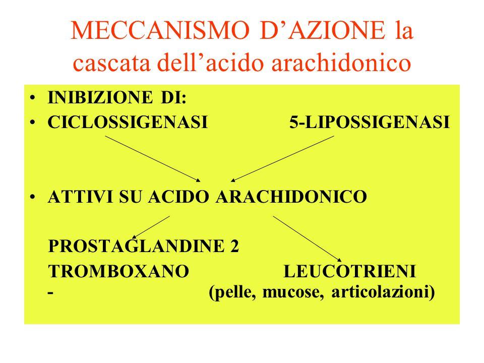 MECCANISMO D'AZIONE la cascata dell'acido arachidonico INIBIZIONE DI: CICLOSSIGENASI 5-LIPOSSIGENASI ATTIVI SU ACIDO ARACHIDONICO PROSTAGLANDINE 2 TRO