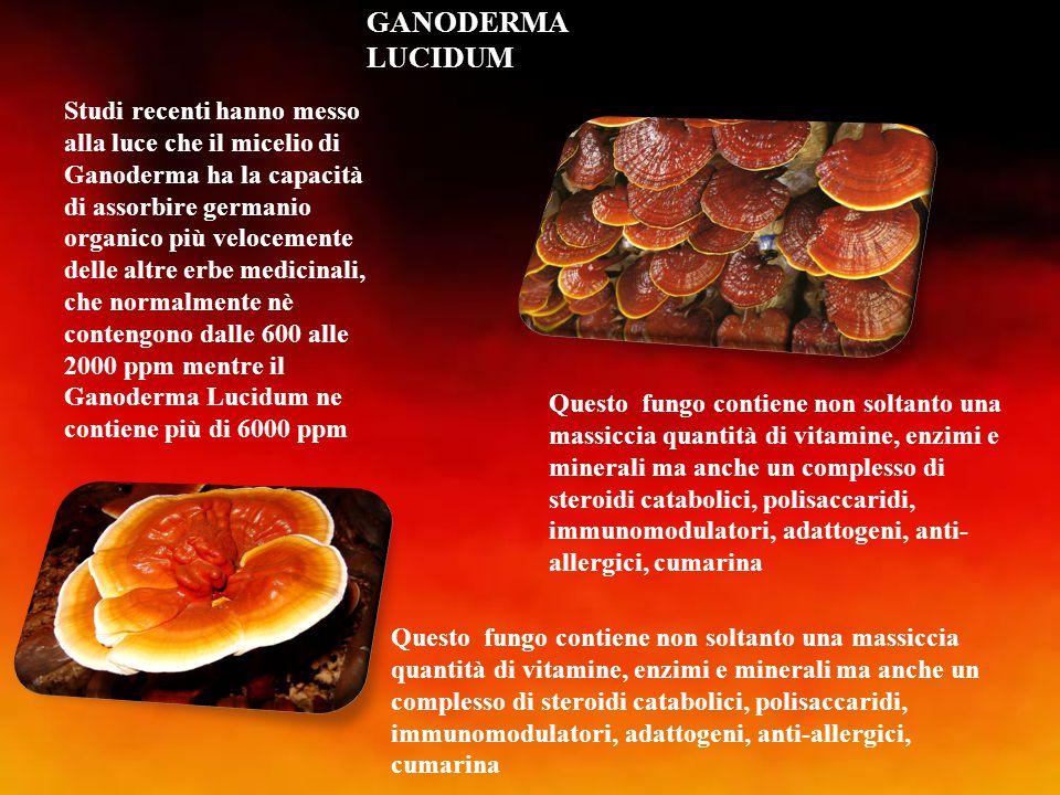 GANODERMA LUCIDUM Studi recenti hanno messo alla luce che il micelio di Ganoderma ha la capacità di assorbire germanio organico più velocemente delle