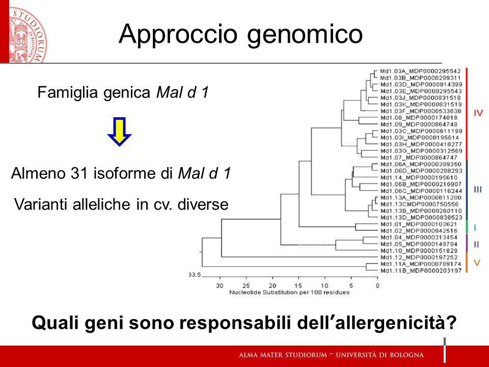 Approccio genomico Famiglia genica Mal d 1 Almeno 31 isoforme di Mal d 1 Varianti alleliche in cv.