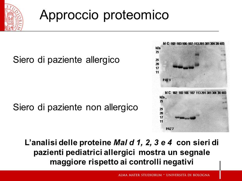 Siero di paziente allergico Siero di paziente non allergico L'analisi delle proteine Mal d 1, 2, 3 e 4 con sieri di pazienti pediatrici allergici mostra un segnale maggiore rispetto ai controlli negativi Approccio proteomico