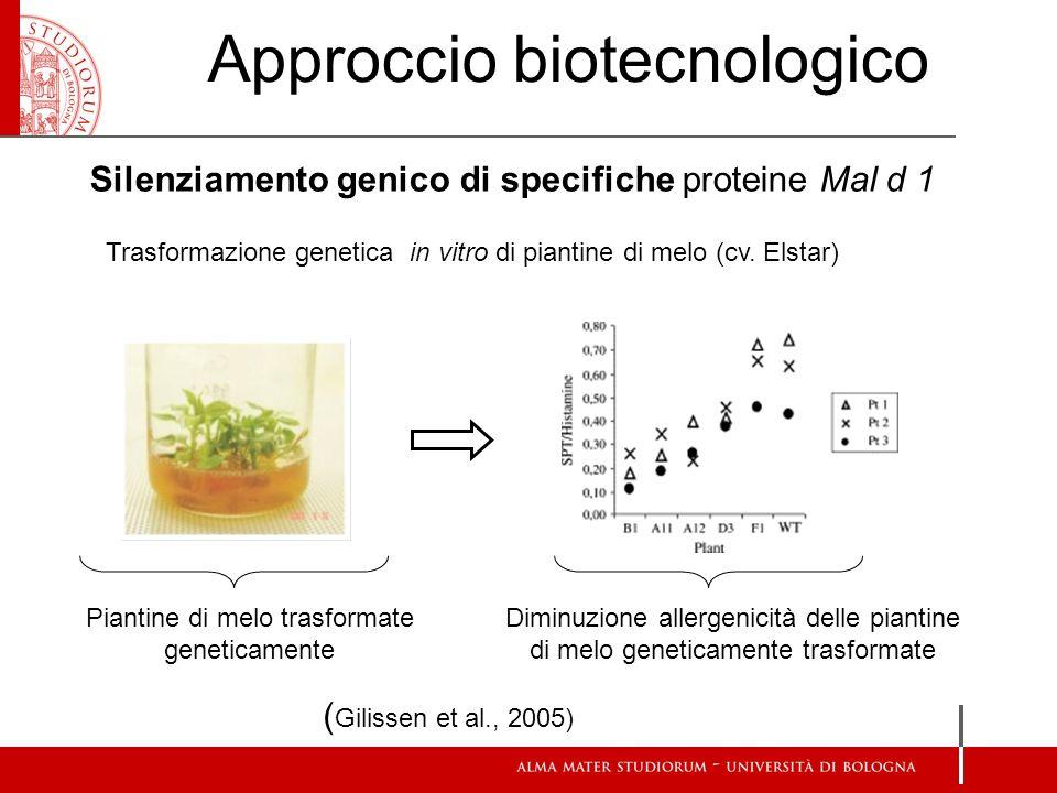 Silenziamento genico di specifiche proteine Mal d 1 Approccio biotecnologico ( Gilissen et al., 2005) Trasformazione genetica in vitro di piantine di melo (cv.