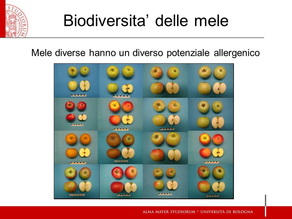 Studi espressione genica (Real Time PCR) in diversi genotipi e tessuti della mela Alta variabilità di espressione Ipotesi: diverso coinvolgimento nell'allergia (Pagliarani et al., 2013) Approccio trascrittomico