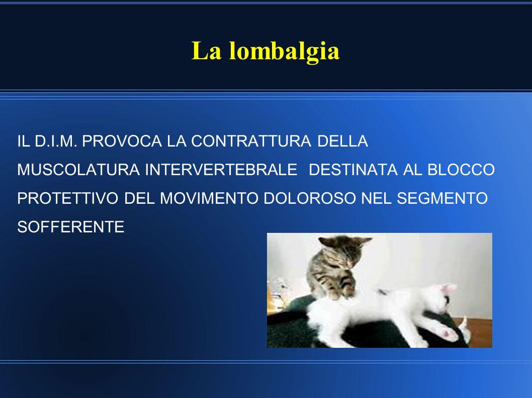 La lombalgia IL D.I.M. PROVOCA LA CONTRATTURA DELLA MUSCOLATURA INTERVERTEBRALE DESTINATA AL BLOCCO PROTETTIVO DEL MOVIMENTO DOLOROSO NEL SEGMENTO SOF