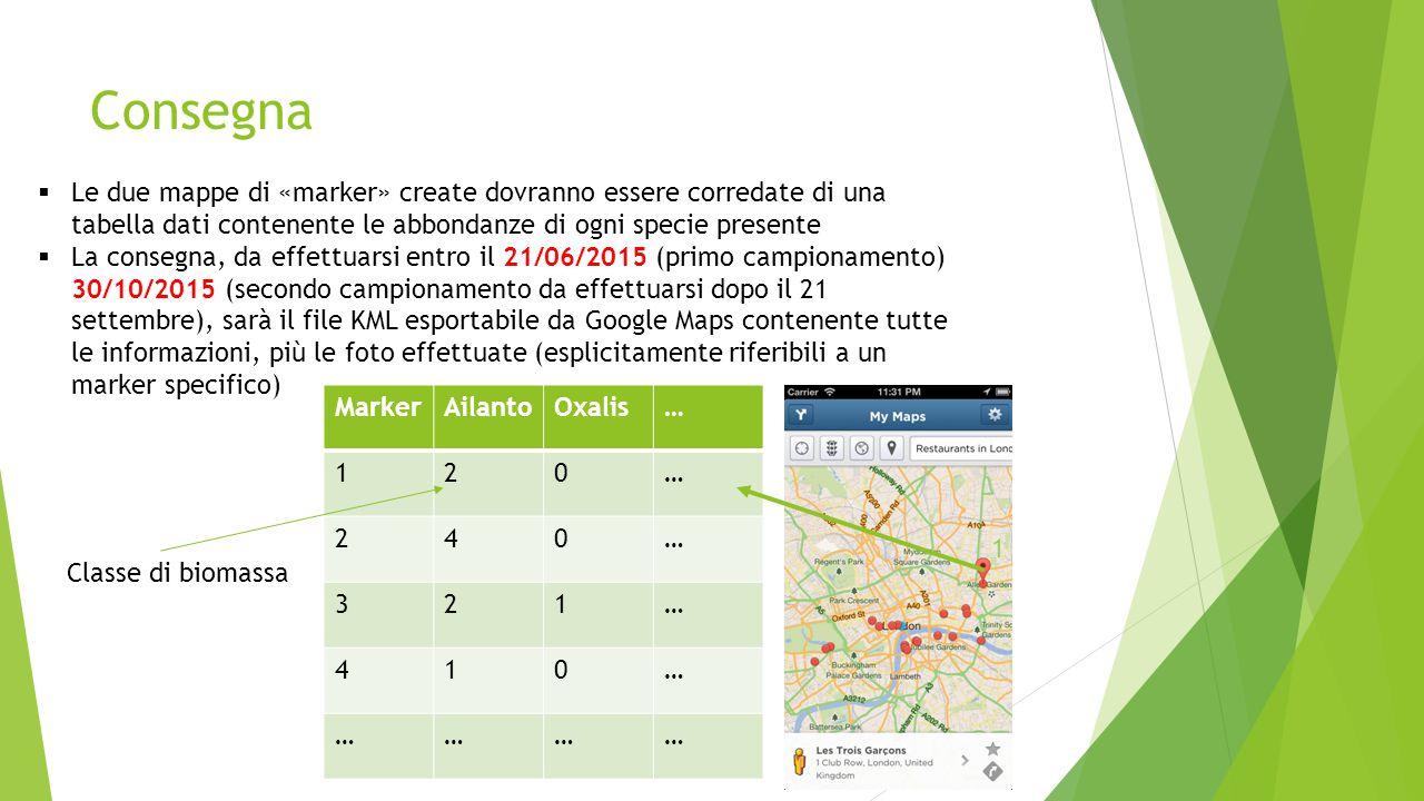 Consegna  Le due mappe di «marker» create dovranno essere corredate di una tabella dati contenente le abbondanze di ogni specie presente  La consegna, da effettuarsi entro il 21/06/2015 (primo campionamento) 30/10/2015 (secondo campionamento da effettuarsi dopo il 21 settembre), sarà il file KML esportabile da Google Maps contenente tutte le informazioni, più le foto effettuate (esplicitamente riferibili a un marker specifico) MarkerAilantoOxalis… 120… 240… 321… 410… ………… 1 Classe di biomassa