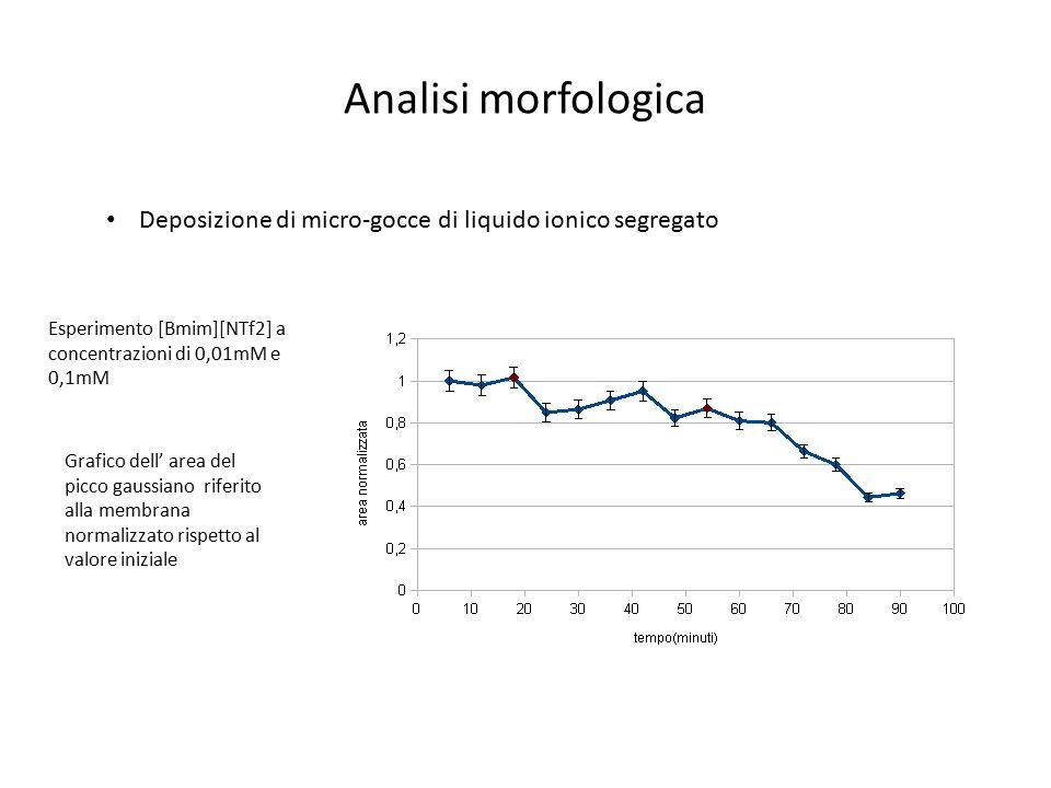 Analisi morfologica Deposizione di micro-gocce di liquido ionico segregato Esperimento [Bmim][NTf2] a concentrazioni di 0,01mM e 0,1mM Grafico dell' a