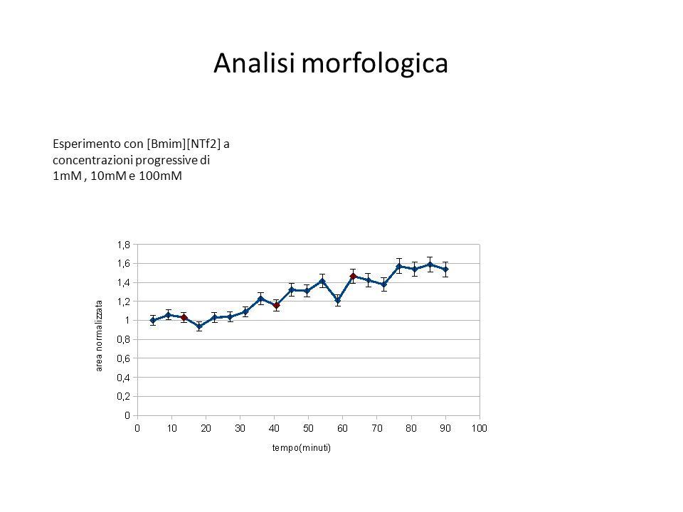 Analisi morfologica Esperimento con [Bmim][NTf2] a concentrazioni progressive di 1mM, 10mM e 100mM