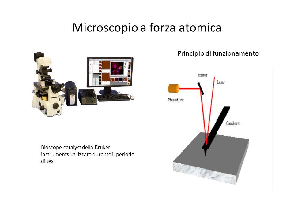 Microscopio a forza atomica Bioscope catalyst della Bruker instruments utilizzato durante il periodo di tesi Principio di funzionamento