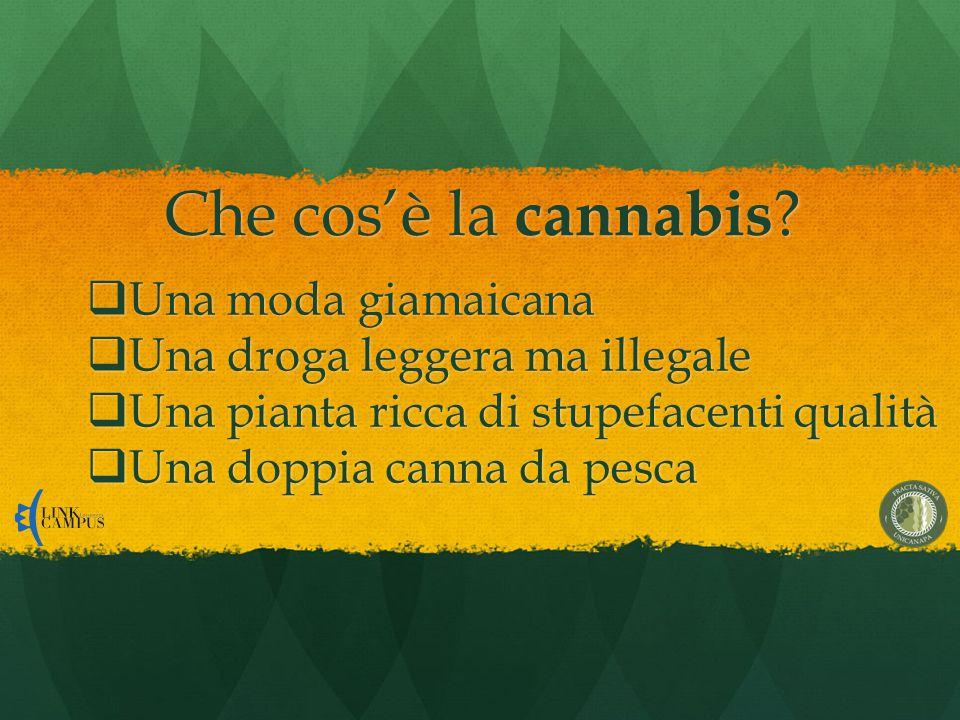 Che cos'è la cannabis .