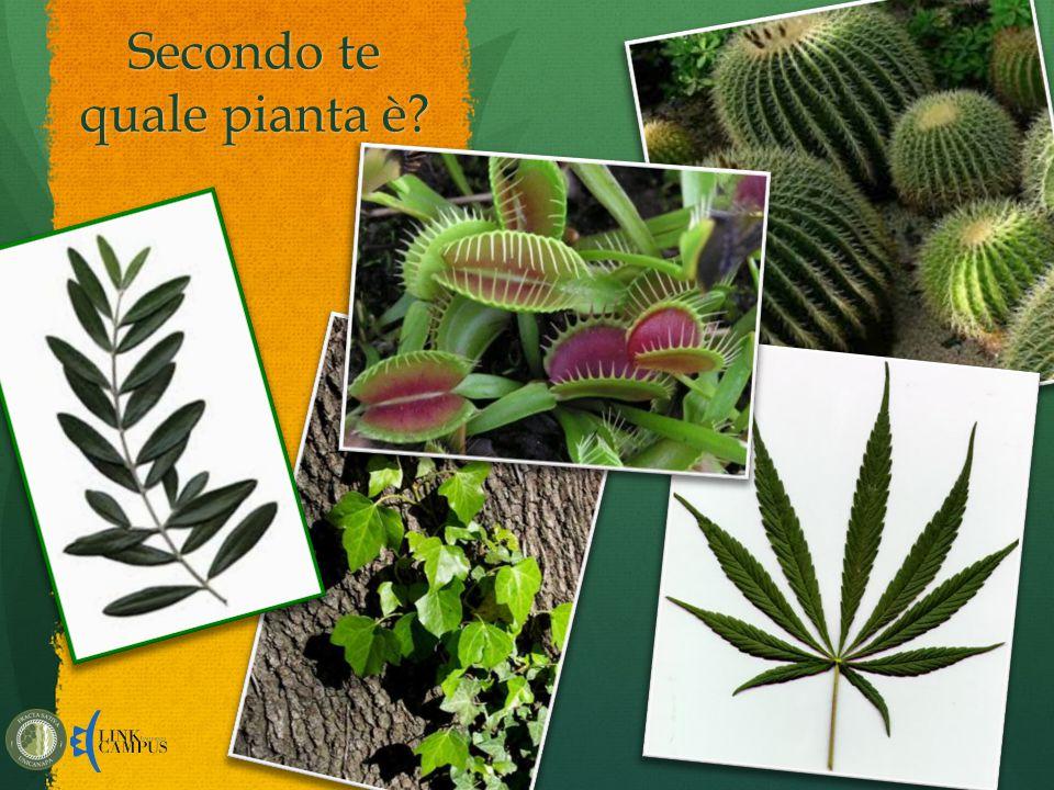 Secondo te quale pianta è