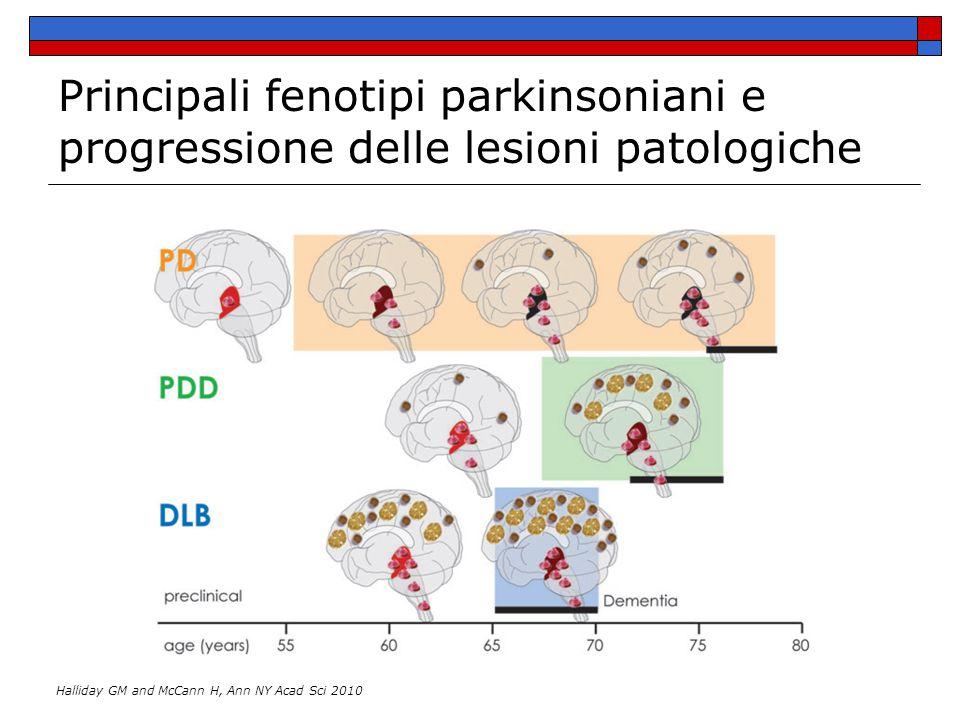 Principali fenotipi parkinsoniani e progressione delle lesioni patologiche Halliday GM and McCann H, Ann NY Acad Sci 2010