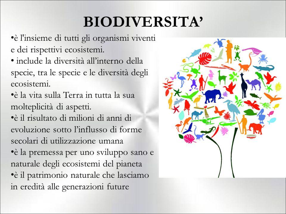 BIODIVERSITA' è l'insieme di tutti gli organismi viventi e dei rispettivi ecosistemi. include la diversità all'interno della specie, tra le specie e l
