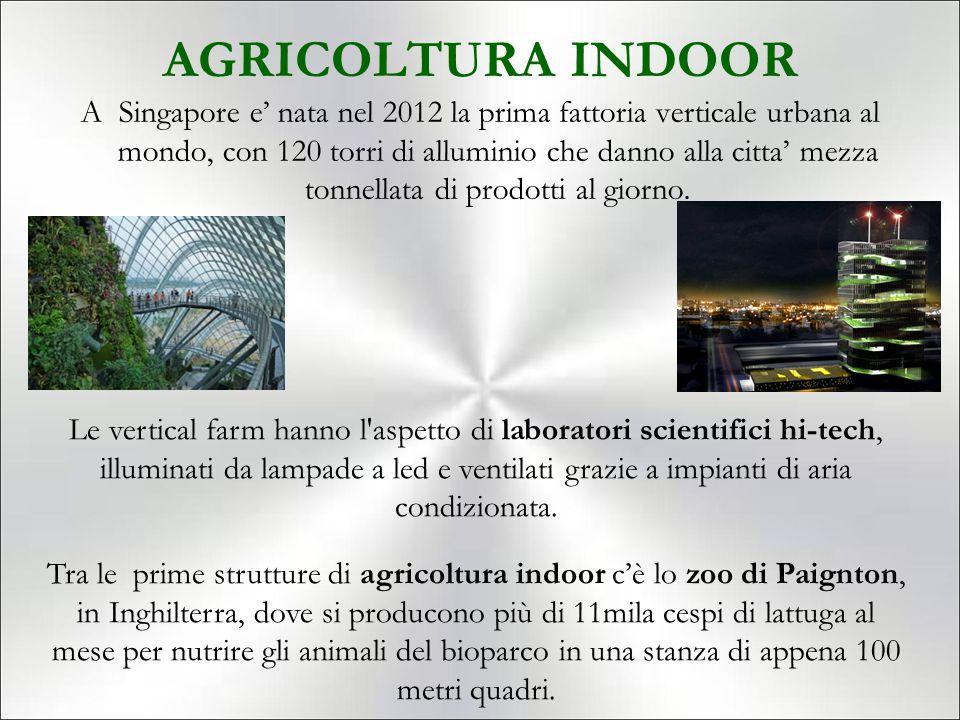 AGRICOLTURA INDOOR A Singapore e' nata nel 2012 la prima fattoria verticale urbana al mondo, con 120 torri di alluminio che danno alla citta' mezza tonnellata di prodotti al giorno.