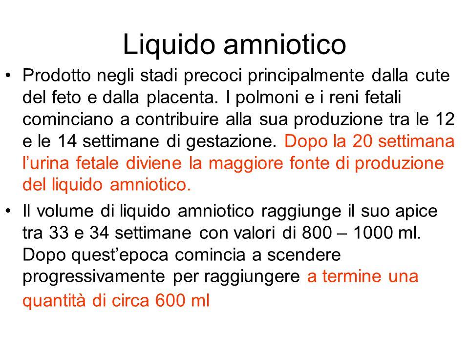 Liquido amniotico Prodotto negli stadi precoci principalmente dalla cute del feto e dalla placenta. I polmoni e i reni fetali cominciano a contribuire