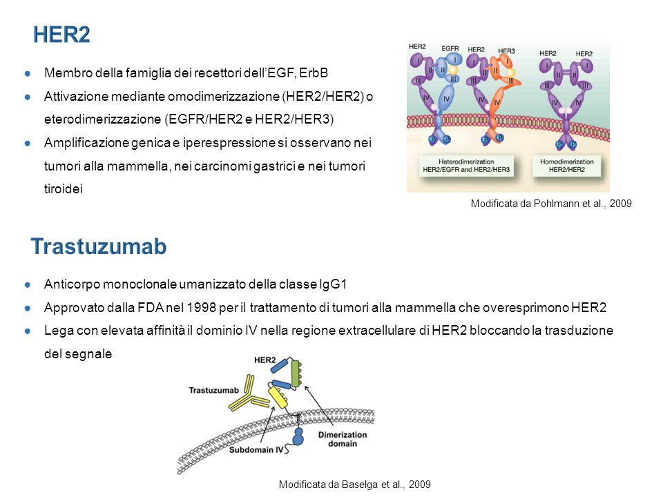 ●Membro della famiglia dei recettori dell'EGF, ErbB ●Attivazione mediante omodimerizzazione (HER2/HER2) o eterodimerizzazione (EGFR/HER2 e HER2/HER3) ●Amplificazione genica e iperespressione si osservano nei tumori alla mammella, nei carcinomi gastrici e nei tumori tiroidei ●Anticorpo monoclonale umanizzato della classe IgG1 ●Approvato dalla FDA nel 1998 per il trattamento di tumori alla mammella che overesprimono HER2 ●Lega con elevata affinità il dominio IV nella regione extracellulare di HER2 bloccando la trasduzione del segnale Modificata da Pohlmann et al., 2009 Modificata da Baselga et al., 2009