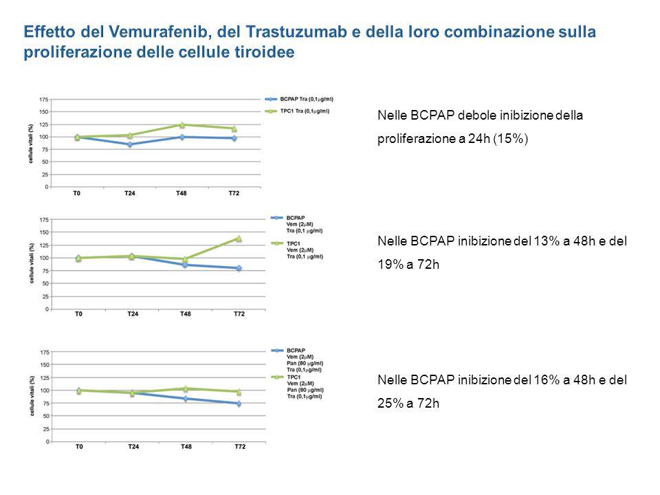 Nelle BCPAP debole inibizione della proliferazione a 24h (15%) Nelle BCPAP inibizione del 13% a 48h e del 19% a 72h Nelle BCPAP inibizione del 16% a 48h e del 25% a 72h