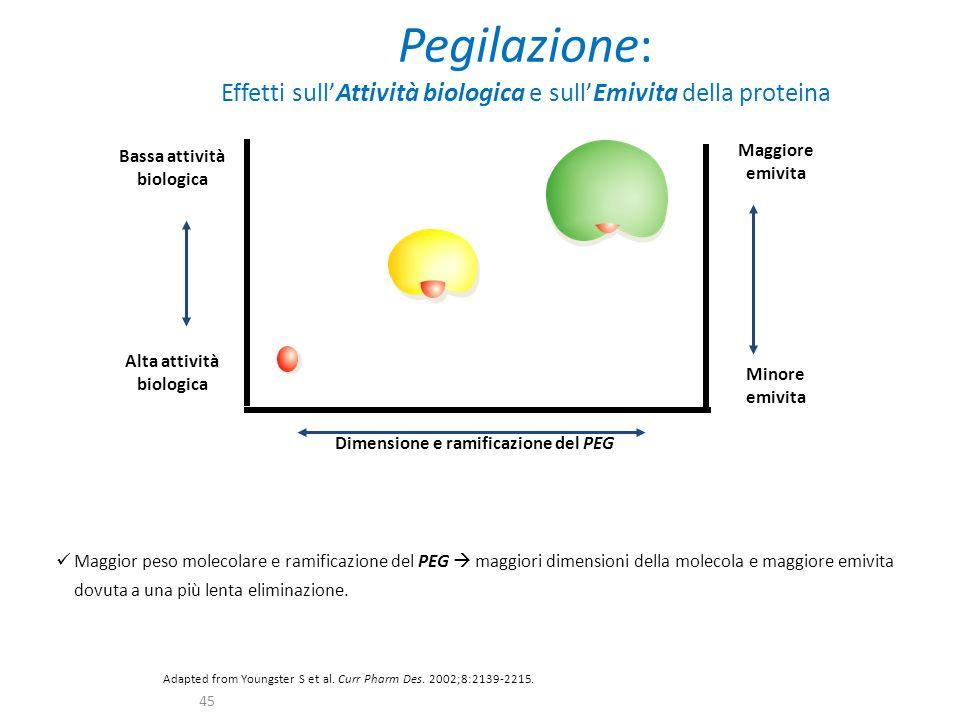 Pegilazione: Effetti sull'Attività biologica e sull'Emivita della proteina Maggior peso molecolare e ramificazione del PEG  maggiori dimensioni della