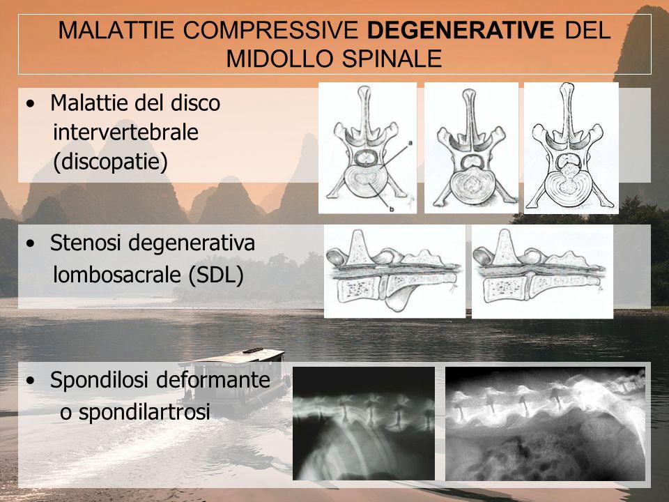 Spondilomielopatia cervicale caudale (Sindrome di Wobbler) Mielopatia degenerativa ….SECONDO LA MEDICINA TRADIZIONALE CINESE Sindrome Ostruttiva Dolorosa (Bi Zheng) Sindrome Bi