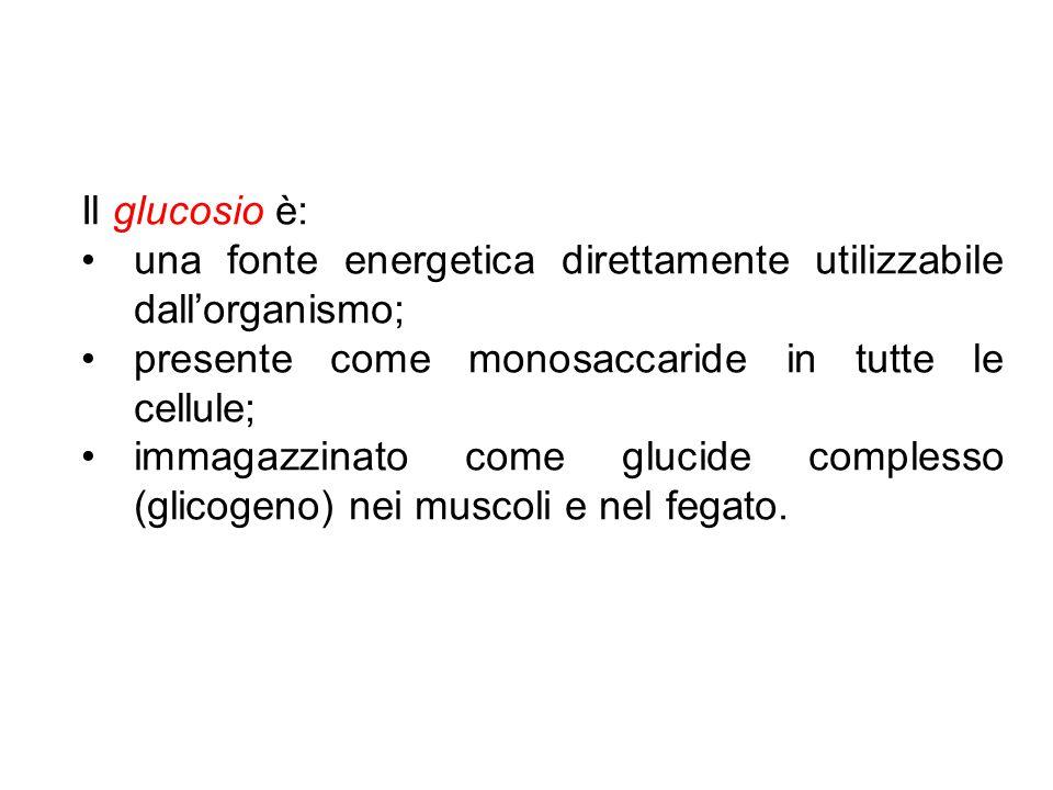 Il glucosio è: una fonte energetica direttamente utilizzabile dall'organismo; presente come monosaccaride in tutte le cellule; immagazzinato come gluc