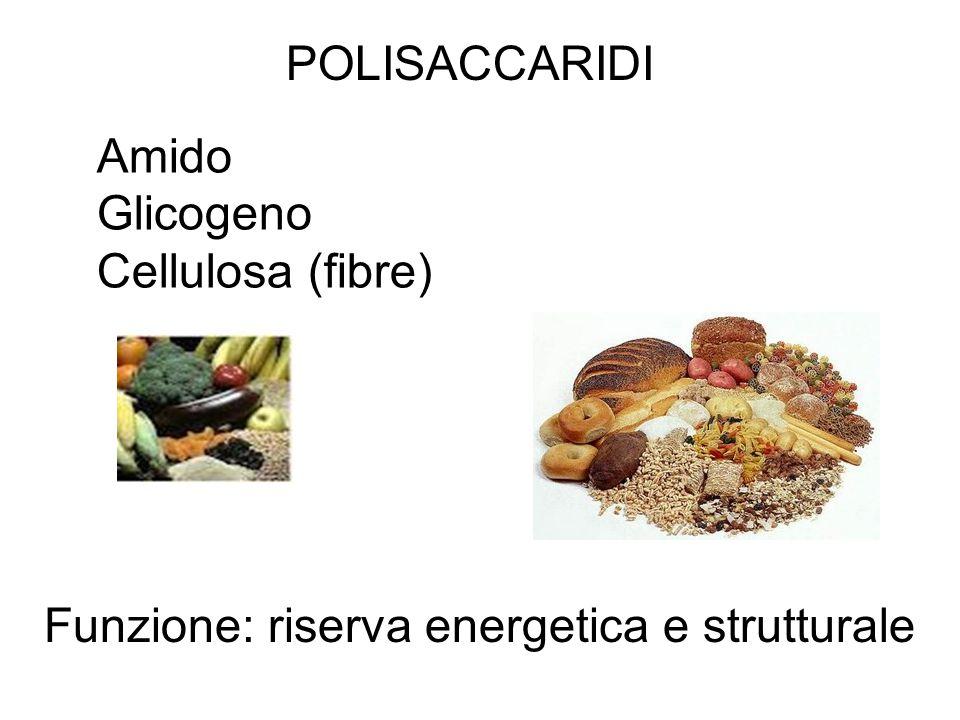 Amido Glicogeno Cellulosa (fibre) Funzione: riserva energetica e strutturale POLISACCARIDI