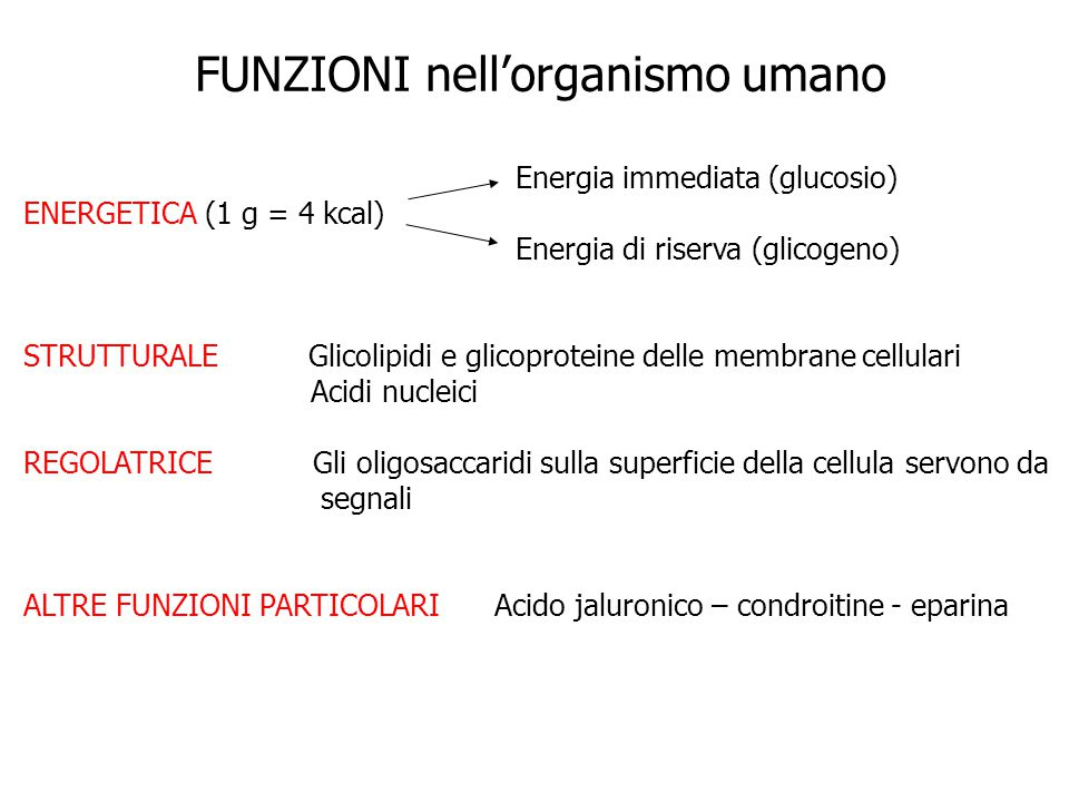 FUNZIONI nell'organismo umano Energia immediata (glucosio) ENERGETICA (1 g = 4 kcal) Energia di riserva (glicogeno) STRUTTURALE Glicolipidi e glicopro