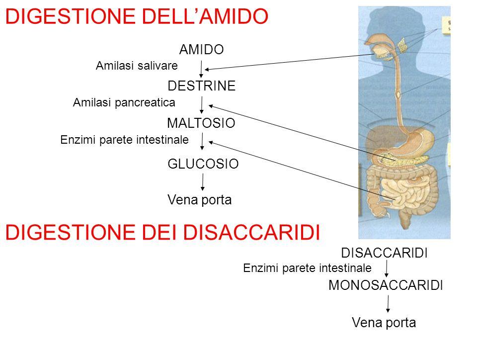 Enzimi parete intestinale DIGESTIONE DELL'AMIDO AMIDO DESTRINE MALTOSIO GLUCOSIO Vena porta Amilasi salivare Amilasi pancreatica Enzimi parete intesti