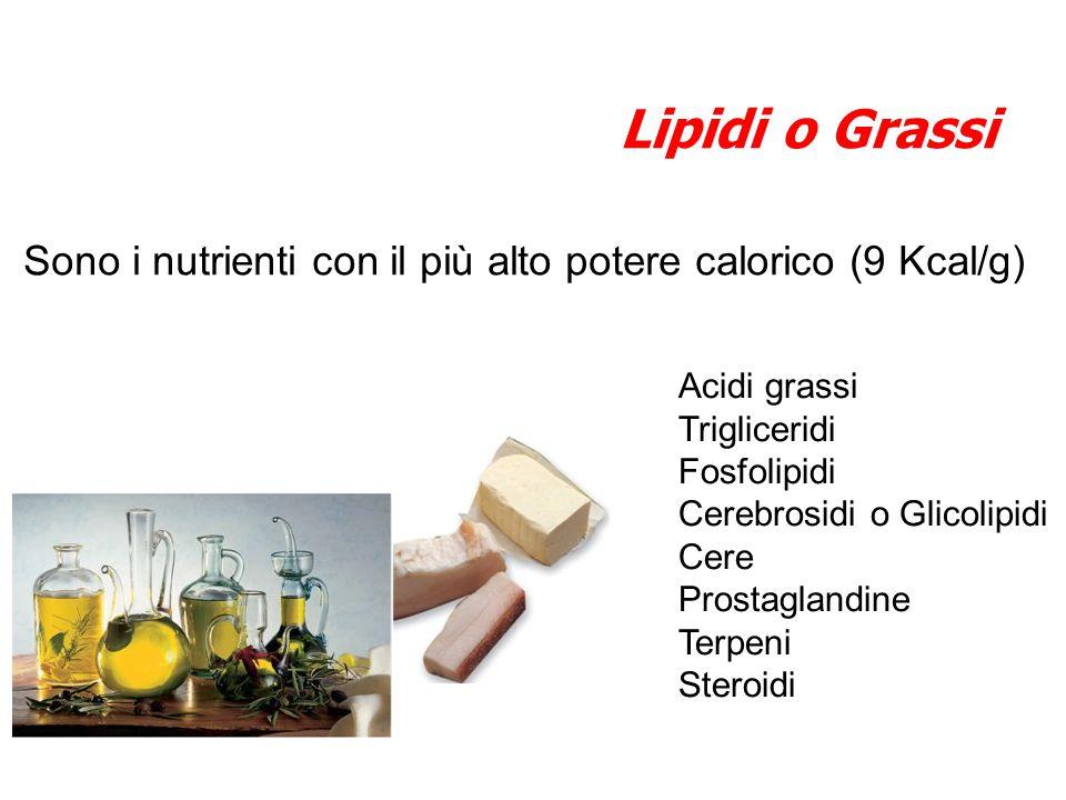 Sono i nutrienti con il più alto potere calorico (9 Kcal/g) Lipidi o Grassi Acidi grassi Trigliceridi Fosfolipidi Cerebrosidi o Glicolipidi Cere Prost