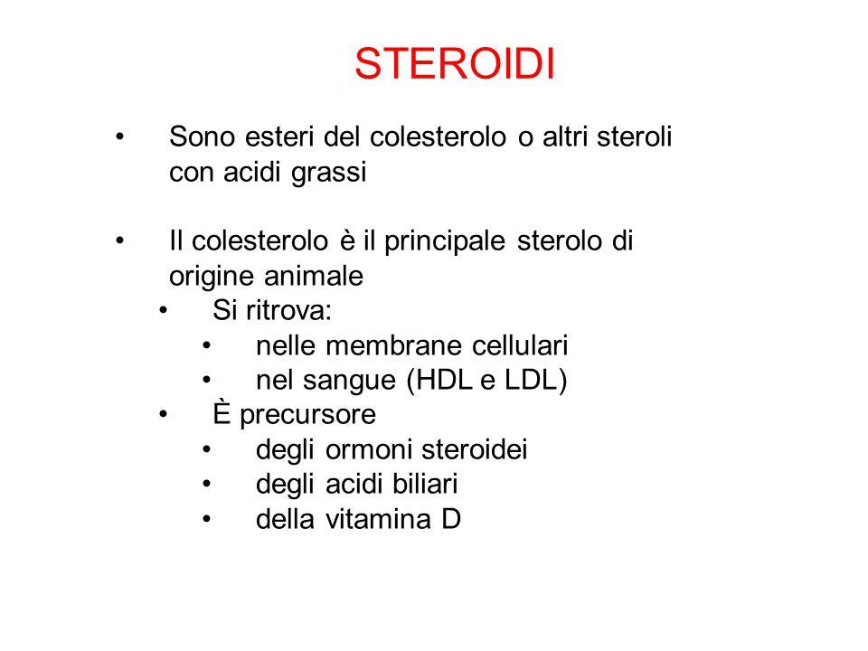 Sono esteri del colesterolo o altri steroli con acidi grassi Il colesterolo è il principale sterolo di origine animale Si ritrova: nelle membrane cell