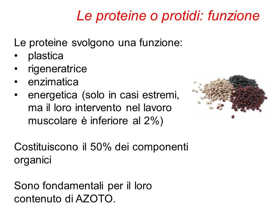 Le proteine svolgono una funzione: plastica rigeneratrice enzimatica energetica (solo in casi estremi, ma il loro intervento nel lavoro muscolare è in