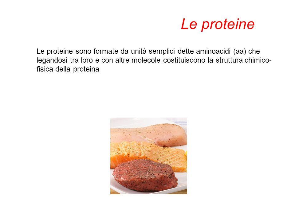 Le proteine sono formate da unità semplici dette aminoacidi (aa) che legandosi tra loro e con altre molecole costituiscono la struttura chimico- fisic