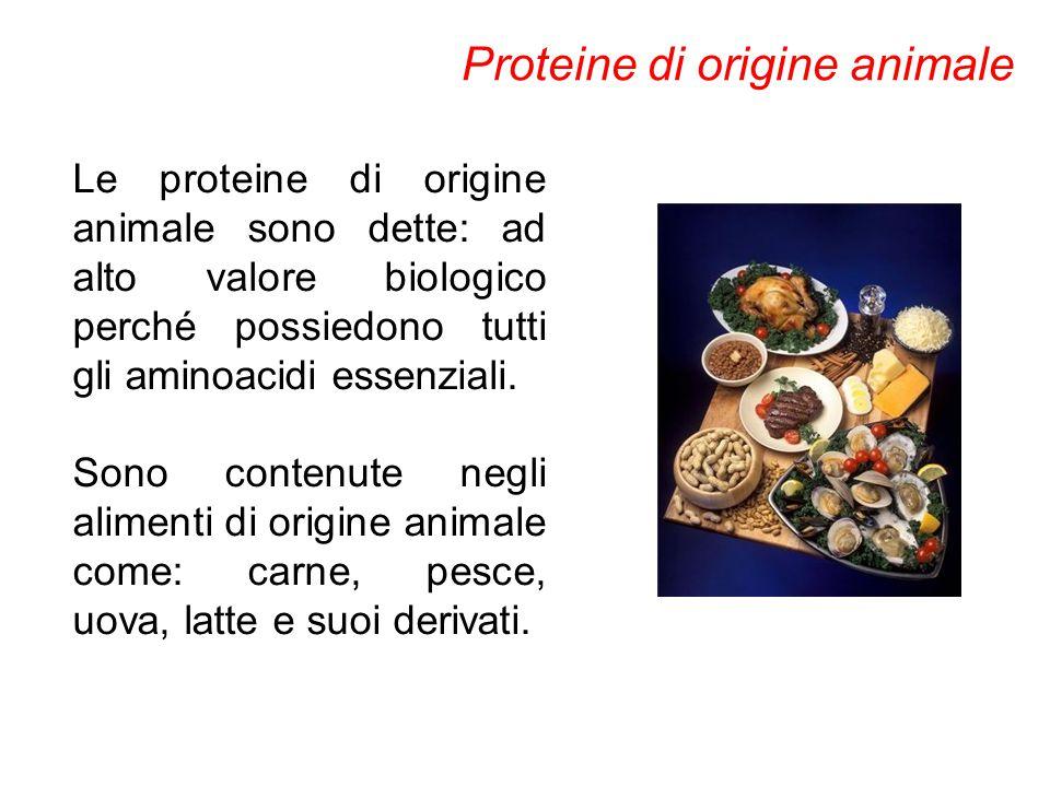Le proteine di origine animale sono dette: ad alto valore biologico perché possiedono tutti gli aminoacidi essenziali. Sono contenute negli alimenti d