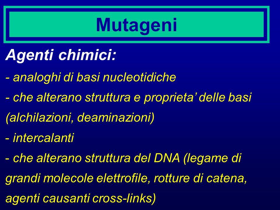 Mutageni Agenti chimici: - analoghi di basi nucleotidiche - che alterano struttura e proprieta' delle basi (alchilazioni, deaminazioni) - intercalanti