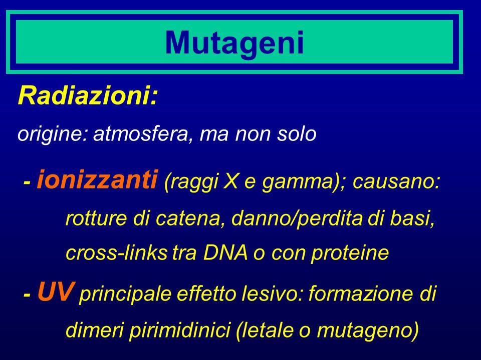 Mutageni Radiazioni: origine: atmosfera, ma non solo - ionizzanti (raggi X e gamma); causano: rotture di catena, danno/perdita di basi, cross-links tr