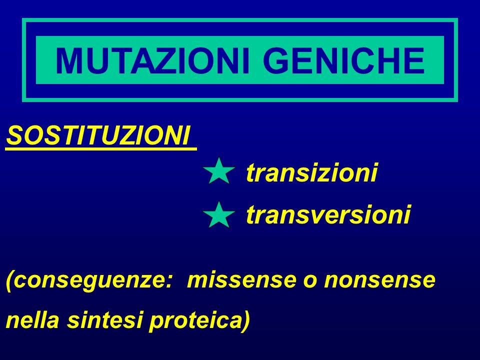 MUTAZIONI GENICHE SOSTITUZIONI transizioni transversioni (conseguenze: missense o nonsense nella sintesi proteica)