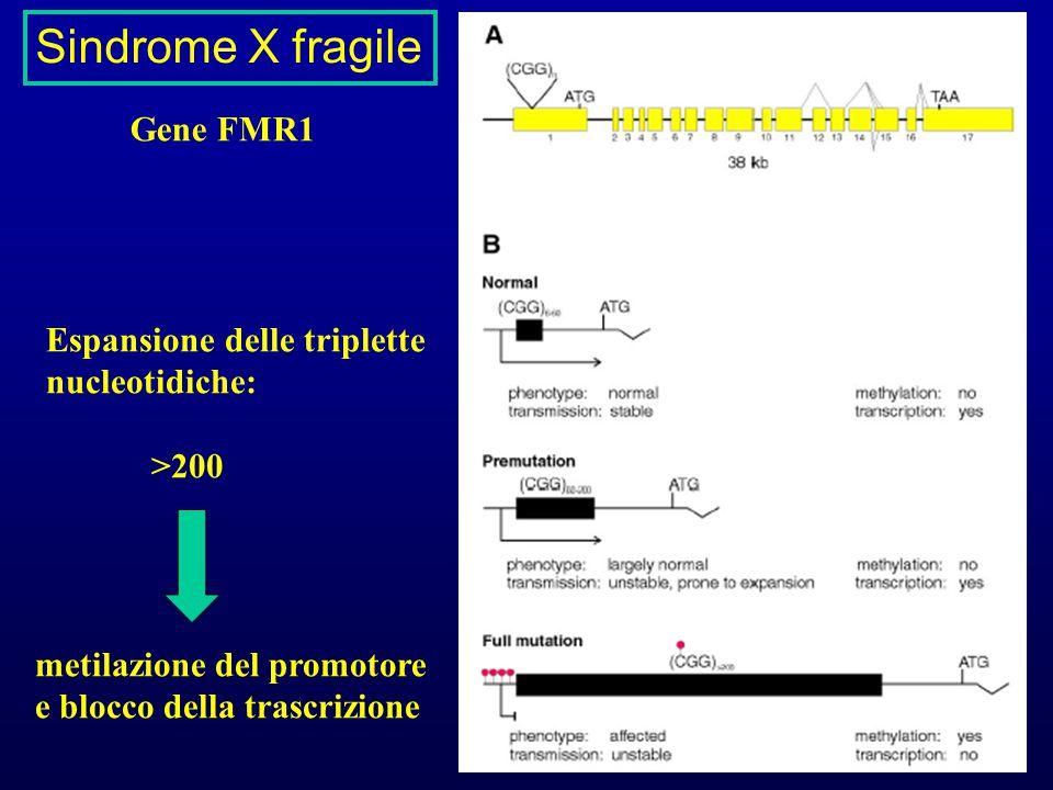 Sindrome X fragile Gene FMR1 Espansione delle triplette nucleotidiche: >200 metilazione del promotore e blocco della trascrizione