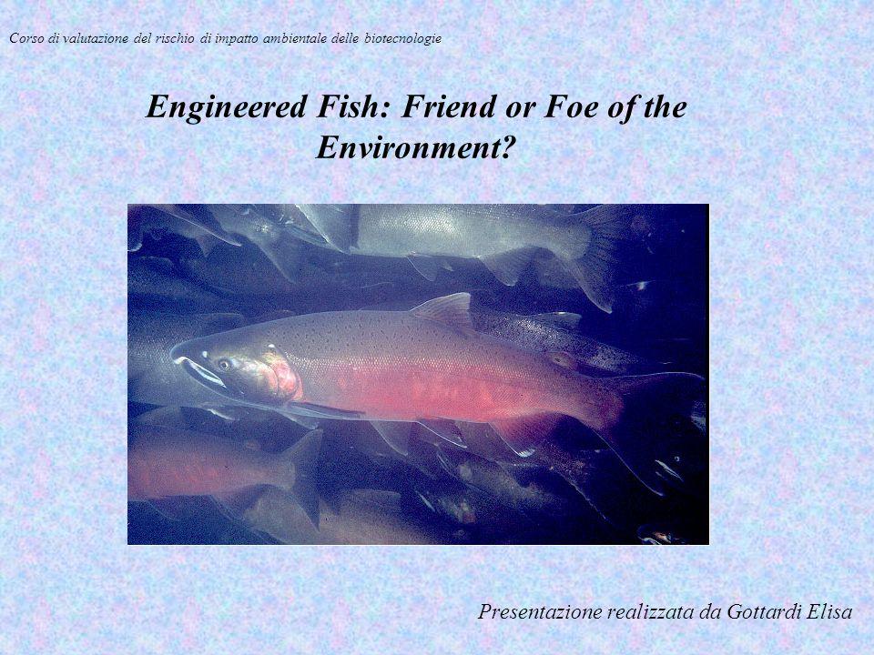 Presentazione realizzata da Gottardi Elisa Corso di valutazione del rischio di impatto ambientale delle biotecnologie Engineered Fish: Friend or Foe o