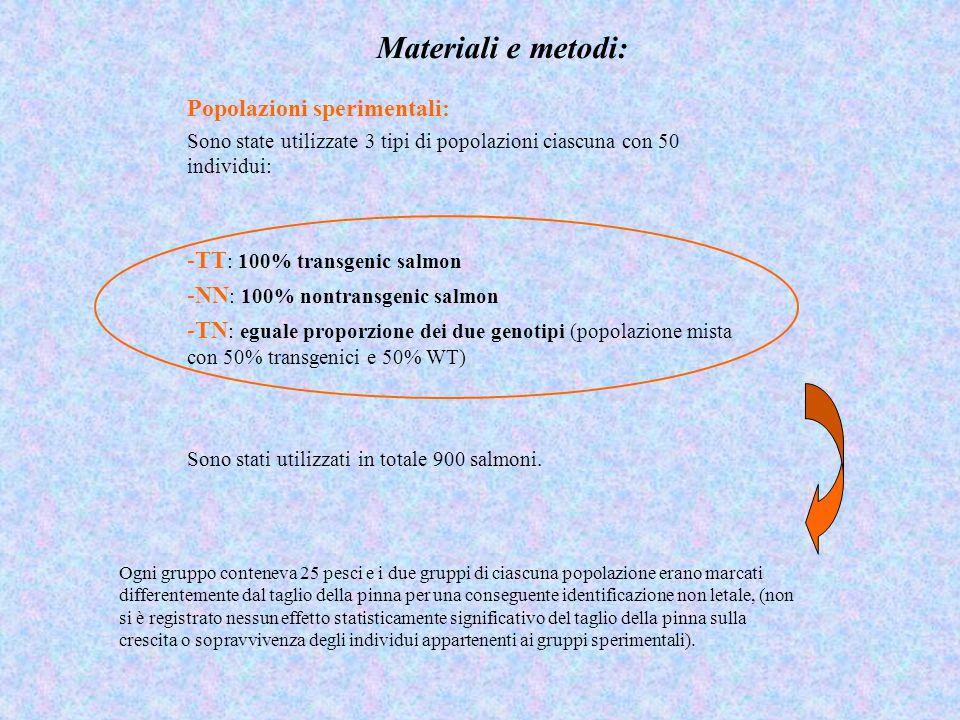 Materiali e metodi: Popolazioni sperimentali: Sono state utilizzate 3 tipi di popolazioni ciascuna con 50 individui: -TT : 100% transgenic salmon -NN : 100% nontransgenic salmon -TN : eguale proporzione dei due genotipi (popolazione mista con 50% transgenici e 50% WT) Sono stati utilizzati in totale 900 salmoni.