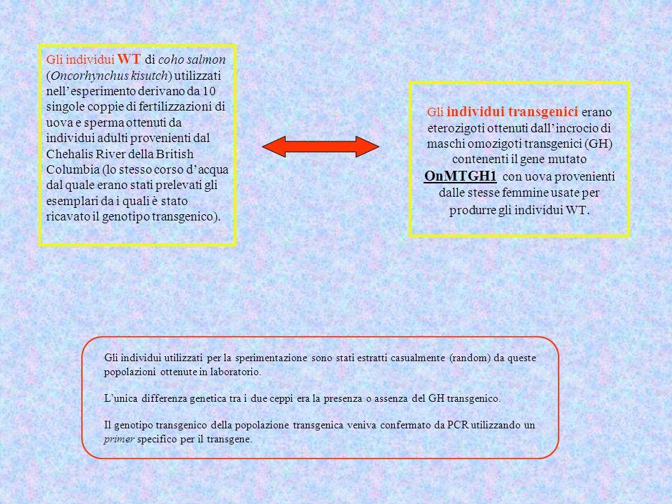 Gli individui transgenici erano eterozigoti ottenuti dall'incrocio di maschi omozigoti transgenici (GH) contenenti il gene mutato OnMTGH1 con uova pro
