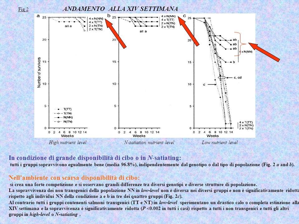Fig 2 ANDAMENTO ALLA XIV SETTIMANA In condizione di grande disponibilità di cibo o in N-satiating: tutti i gruppi sopravvivono egualmente bene (media