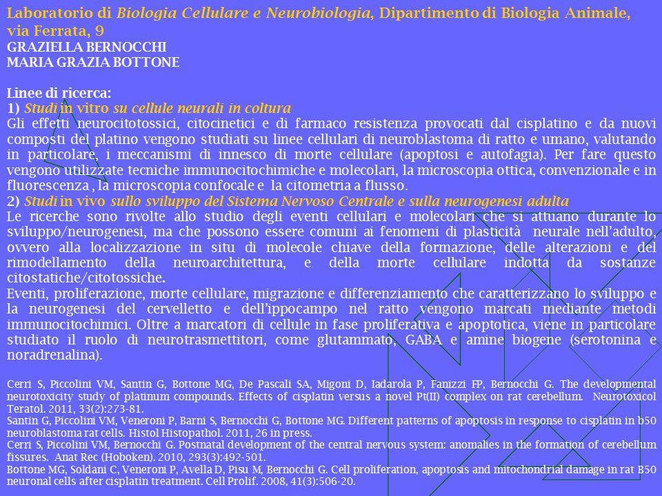 Laboratorio di Biologia Cellulare e Neurobiologia, Dipartimento di Biologia Animale, via Ferrata, 9 GRAZIELLA BERNOCCHI MARIA GRAZIA BOTTONE Linee di