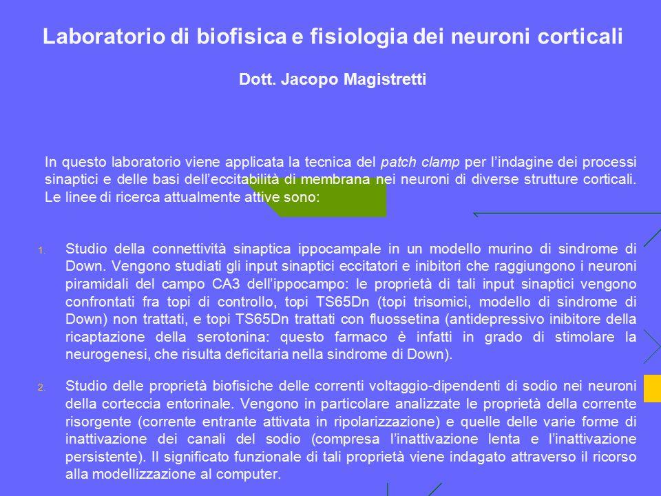 Laboratorio di biofisica e fisiologia dei neuroni corticali Dott. Jacopo Magistretti 1. Studio della connettività sinaptica ippocampale in un modello