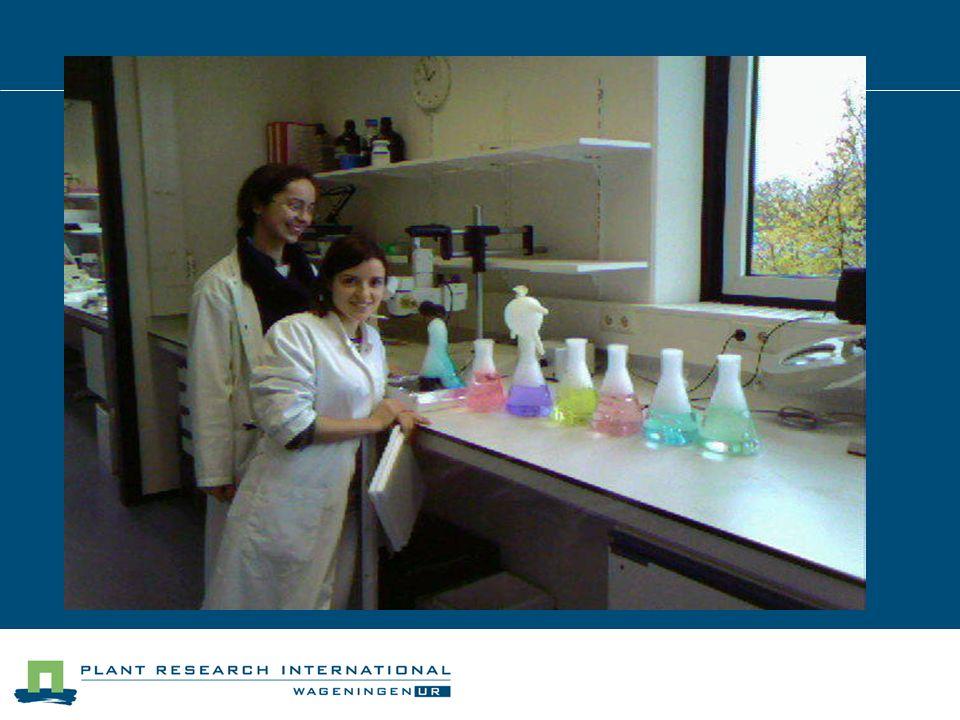 Tecniche di laboratorio utilizzate: PCR CLONAZIONE SEQUENZIAMENTO DEL DNA ELETTROFORESI TRASFORMAZIONE DI PIANTE TRASFORMAZIONE DI COSTRUTTI IN E.COLI E CELLULE DI LIEVITO TEST PROTEICI UTILIZZANDO IBRIDI DI LIEVITO