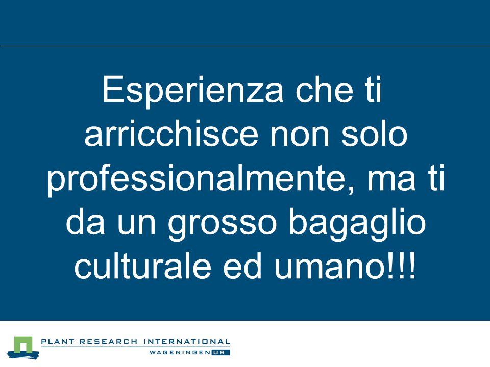Esperienza che ti arricchisce non solo professionalmente, ma ti da un grosso bagaglio culturale ed umano!!!
