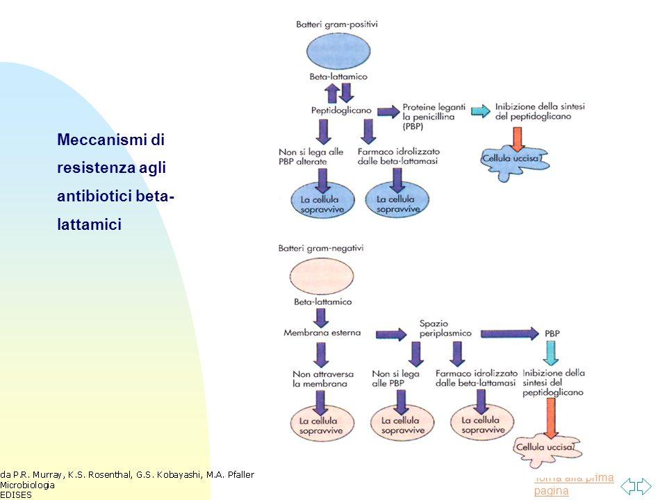 Torna alla prima pagina Meccanismi di resistenza agli antibiotici beta- lattamici