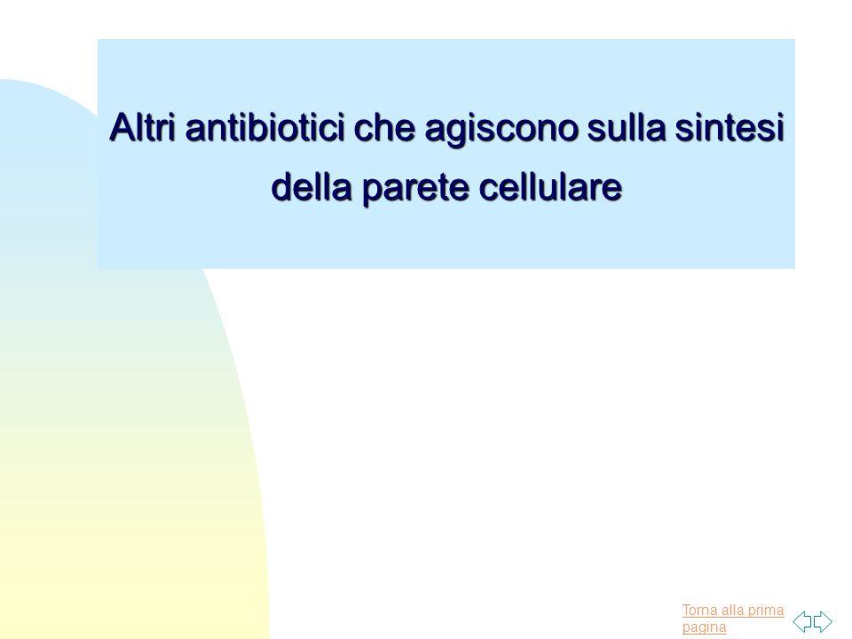 Torna alla prima pagina Altri antibiotici che agiscono sulla sintesi della parete cellulare