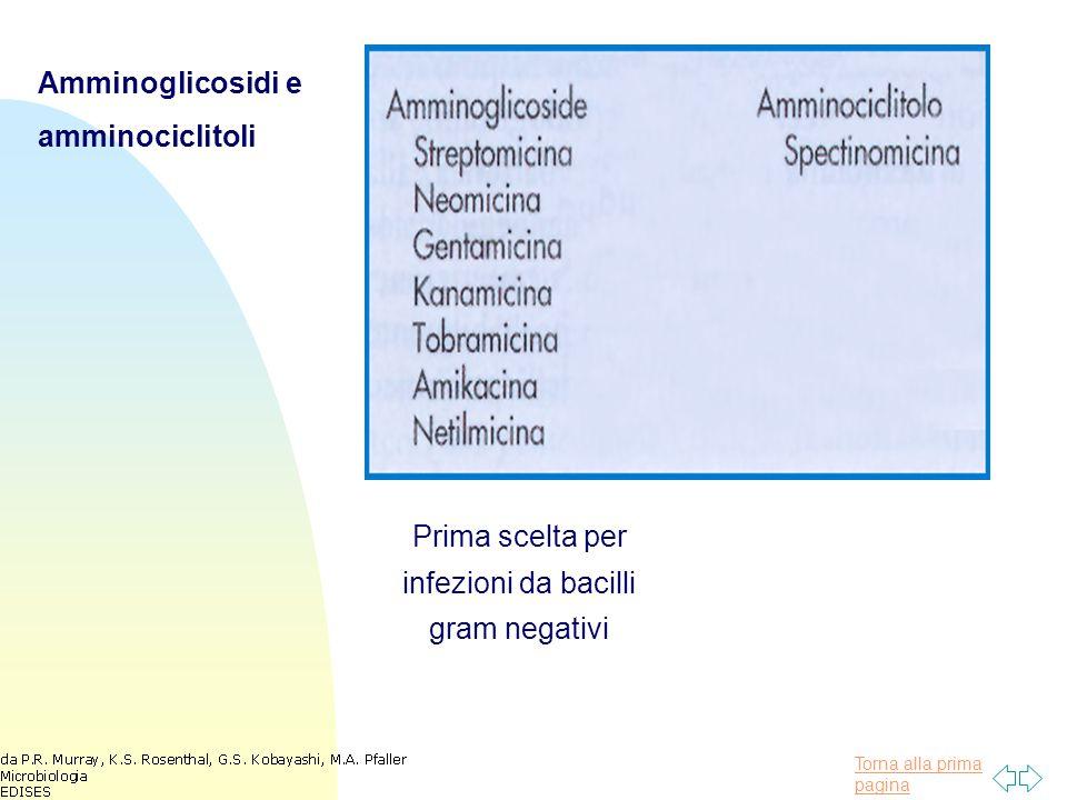 Torna alla prima pagina Amminoglicosidi e amminociclitoli Prima scelta per infezioni da bacilli gram negativi